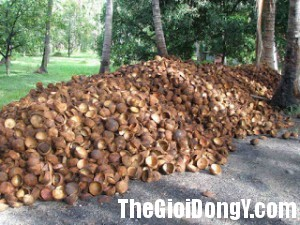 coconut shells 300x225 Các bài thuốc hay trị dứt điểm hắc lào