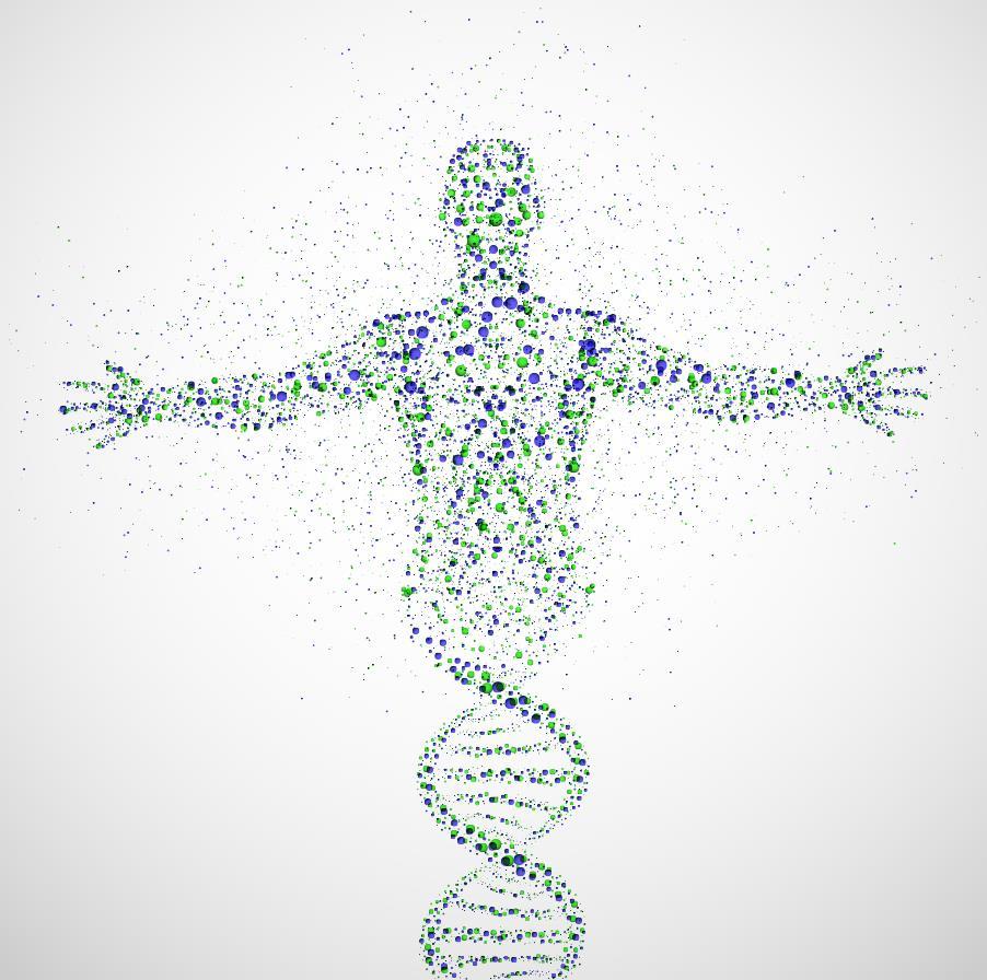 phat hien bo gen thu 2 Tạng nào nặng nhất cơ thể? Và sự quan trọng của nó