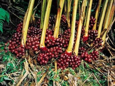 thaoqua 400 01 Điều trị rối loạn tiêu hóa nhanh chóng nhờ cây thảo quả