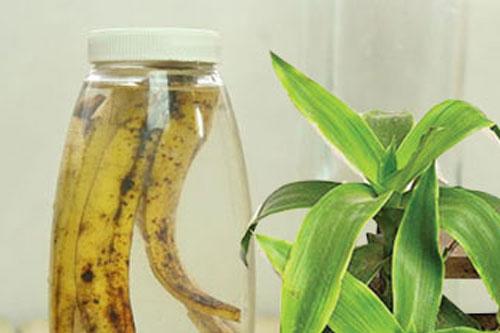 luoc vang chua viem hong 1 Chữa Amidan đơn giản với bài thuốc cây lược vàng