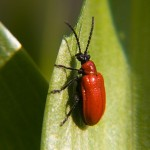 red-bug-1439397148720