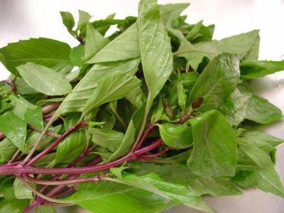 4 loai thao duoc giup tri nhiet mieng trong vuon nha2 Khám phá 4 loại thảo dược giúp trị nhiệt miệng trong vườn nhà