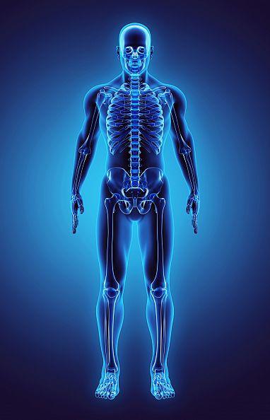 te bao goc 1 Tế bào gốc trong xương người có khả năng tự làm mới để tái tạo xương, mô sụn