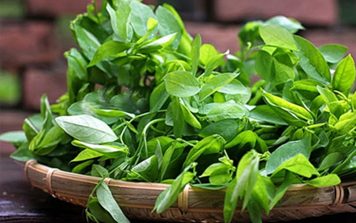 Ba bau An rau ngot co gay xay thai khong 89 Rau ngót, thực phẩm bổ dưỡng nếu biết cách ăn – Nếu không, có thể khiến xảy thai